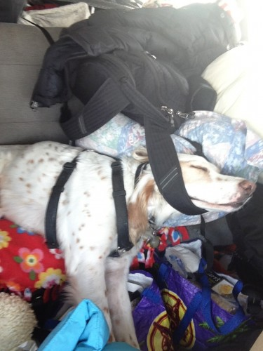 Bromont was pretty tired on the drive over and used the strap on my backpack to hold his head up.  Lazy little man.