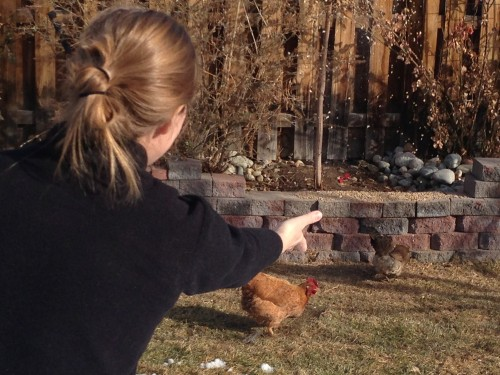 Lisa feeding the chickens in their backyard.