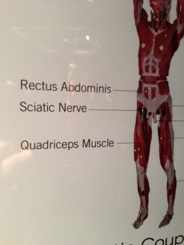 I'm not sure about the accuracy of all the information.  I'm pretty sure that isn't where the sciatic nerve is.