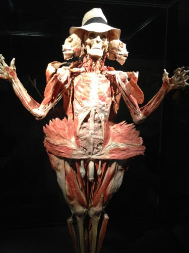This is an example of the Body World show.  It wasn't nearly as gruesome as you might imagine.