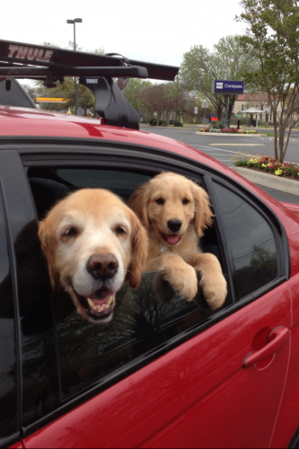 Stanley and Lulu on an outing.
