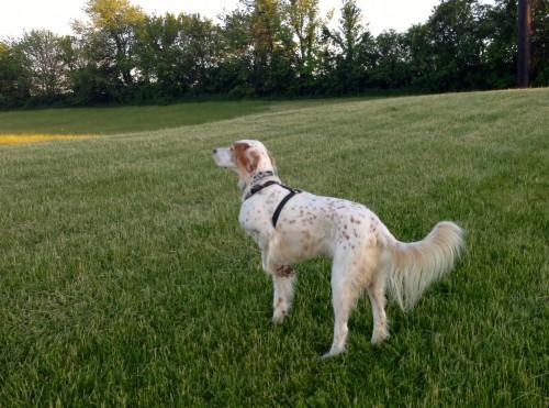Bromont looking all fancy in Burlington Iowa last weekend.