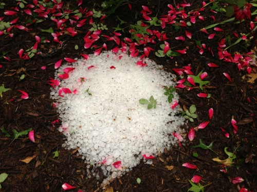 This pile of hail was still in my front yard at noon yesterday.