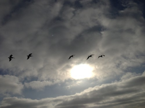 I love watching the pelicans glide back and forth down the coast.  They fly so effortless.