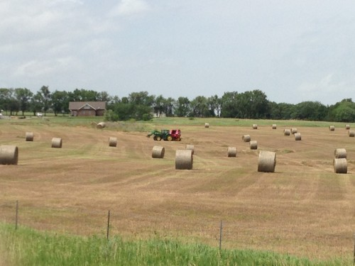Like I said above, there is a lot of hay around here this year.