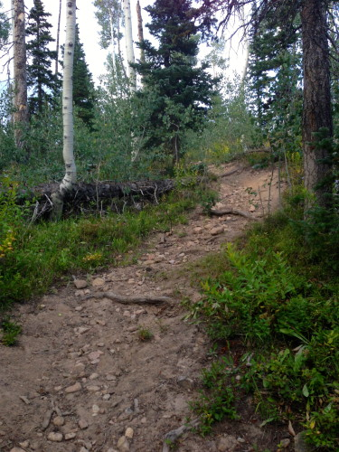 This is Upper Bear trail and it is very hard to climb, even without all the downed trees.