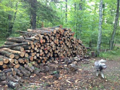 Wood pile for after the race.  10 loggers cords.  It is really nice oak.  We'll see how my shoulder and hand like this.