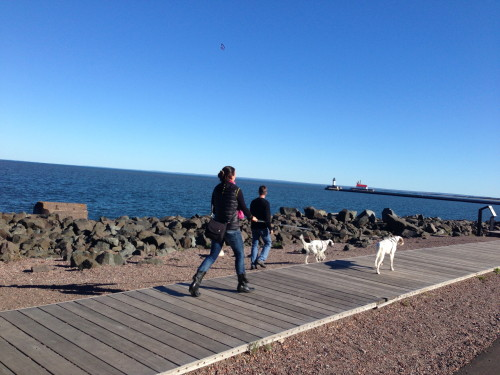 Dog walking on the board walk.
