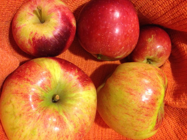 The apples out on Bainbridge are to die for.