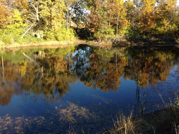 I like it when leaves fall into ponds.  It seems like they are suspended in place and it changes the color of the water.