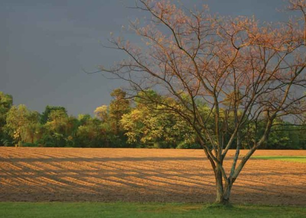 fieldshadows