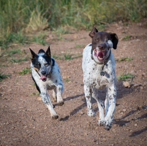 Ranger and little sister, Kaya, doing what they do best, run.