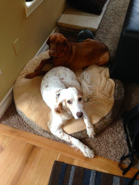 Bromont and Vincent's dog, Jack, are best buddies.
