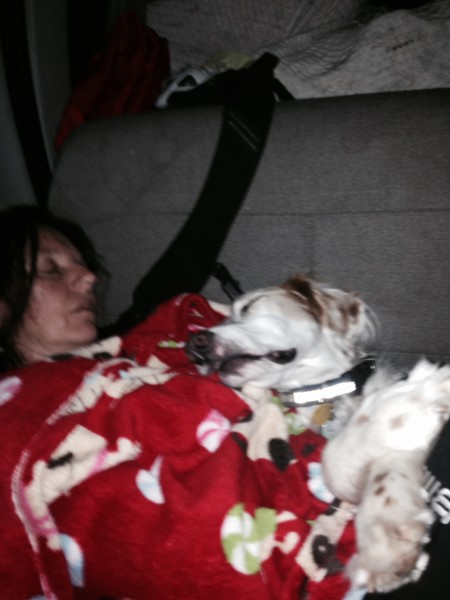 Trudi and Bromont aren't short of sleep today.  They slept most of the way back to Topeka.