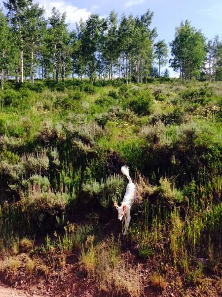 Bromont loves running around the mountains.