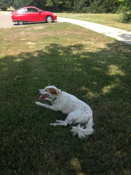 "Bromont likes to find the shade on his ""walks""."