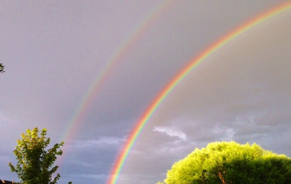 It's been raining for an hour or so every night here in Arvada.  Yesterday, this was the result.  Super beautiful.