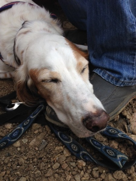 Bromont got tired by mid-day on Saturday.  He used my shoe for a pillow.