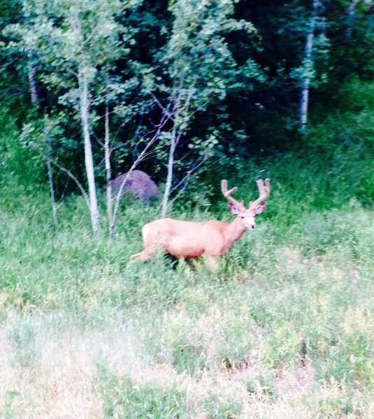 This guy was standing by the road riding back up to the house yesterday.