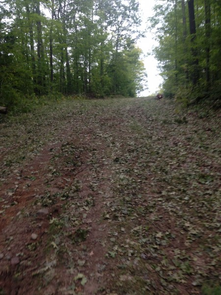 There are tons of leaves on the first section of Birkie trail.