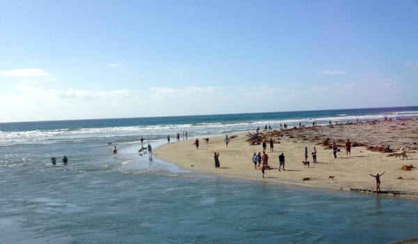 Dog beach, in Del Mar, was pretty crowded yesterday.