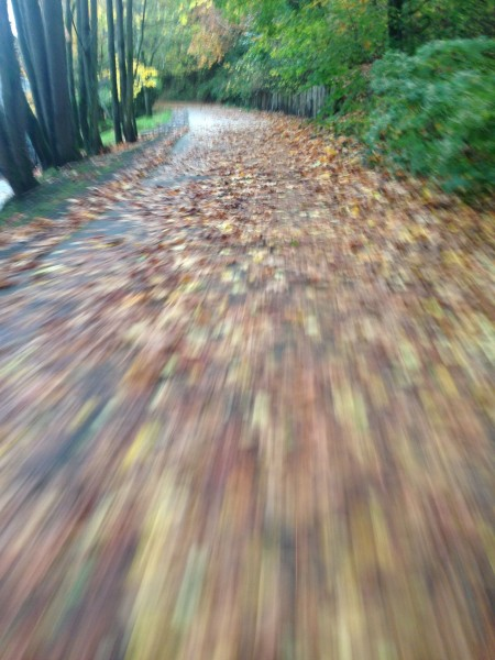 This isn't that usual around here.  The bike paths are covered with leaves, but I assume it is just the time of the year.