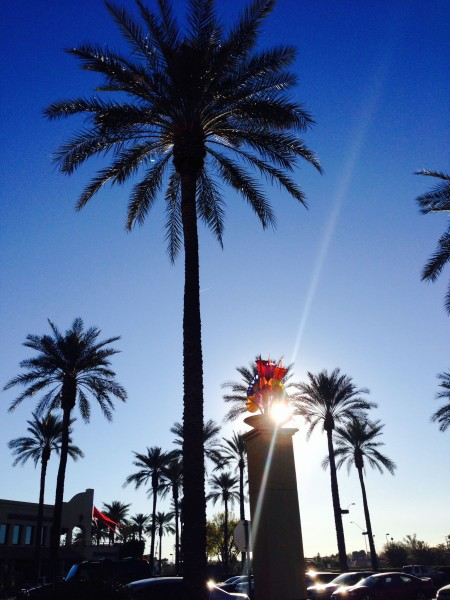It was nice waking up to Palm trees and warmth yesterday.