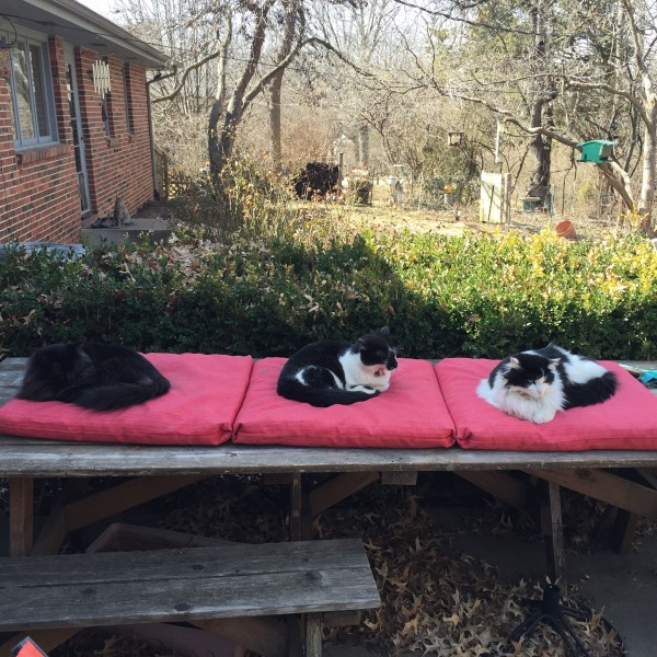 Some of our cats are enjoying the warm weather.