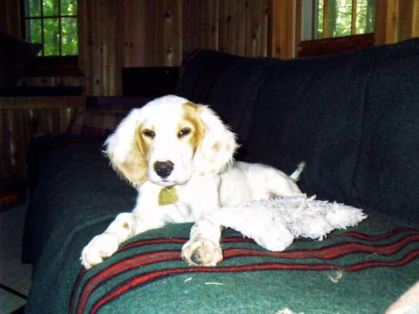 bromont.puppy