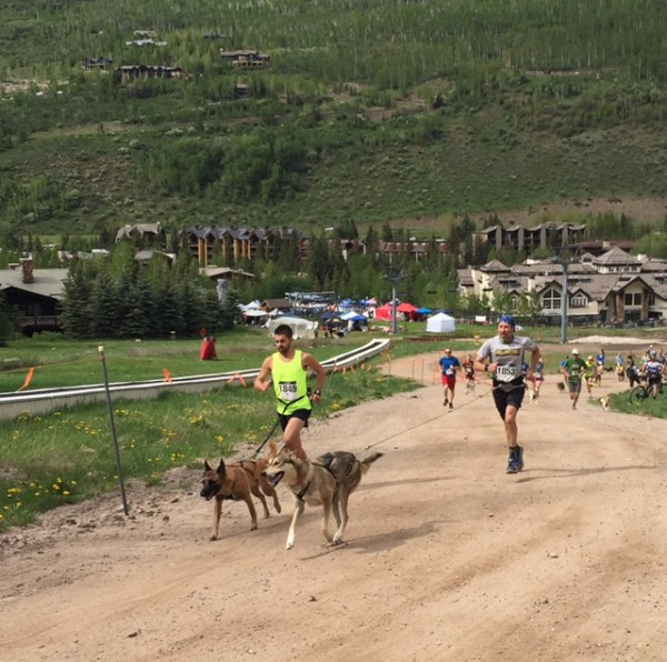 GoPro Dog 5K start.  These guys were getting pulled up the hill.  Winner in less than 19 minutes with a lot of elevation gain.  Pretty impressive.