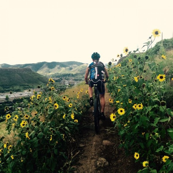 VIncent climbing up through the sunflowers.  Sunflowers don't give much when you are descending.  They can nearly rip you off your bike.