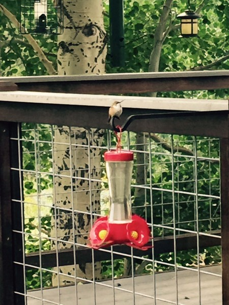 This hummingbird is a little nectar hog.  He sits on top of the feeder and guards it all day.