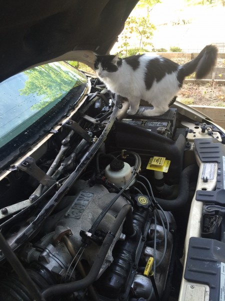 I've been doing a some car work, as long as my ankles can stand it.  Fran was helping me yesterday.