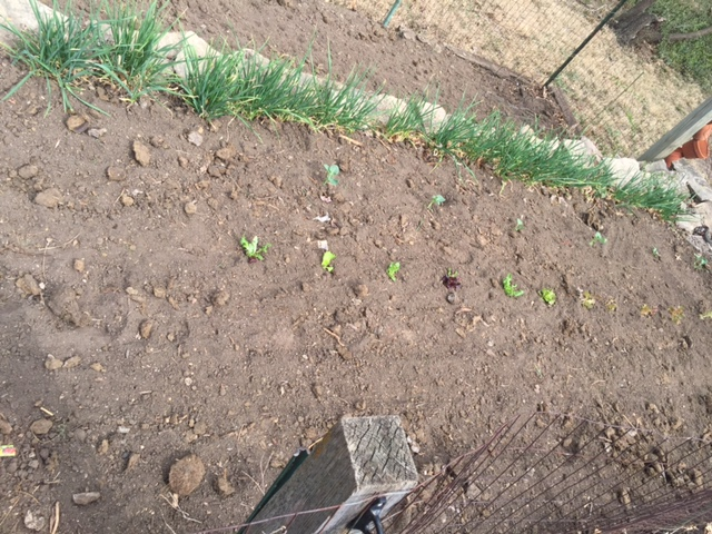 Garden. The grown lettuce was nearly as cheap as the seeds. Weird.