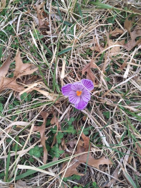 I saw this lone flower out in a field when walking Tucker.