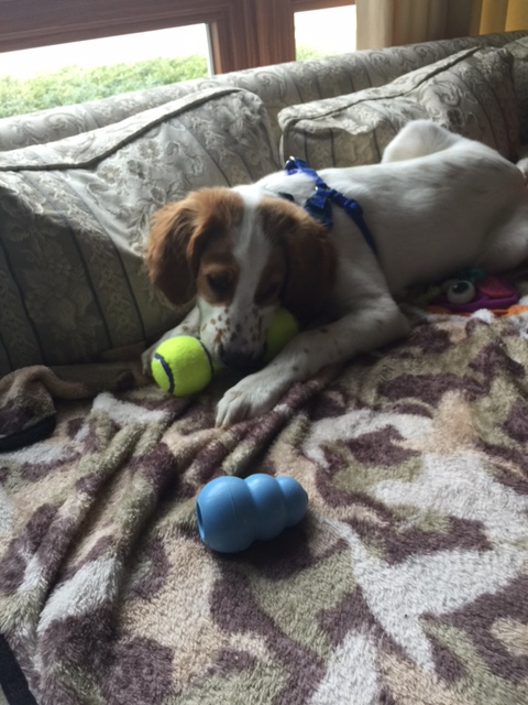 Tucker has a real lot of toys.