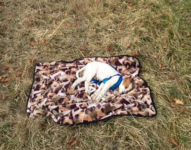 Tucker was done by the time we finished on Sunday. He is on a Duck Dynasty blanket. I'm not sure where that came from.