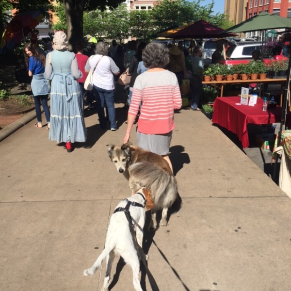 I went to the farmer's market in downtown Fayetteville yesterday before the race.  There were more dogs there than any farmer's market I've been to.