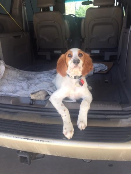 Tucker at the car wash.