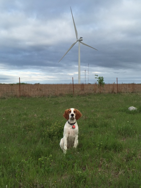 Tucker posing for being the TradeWind Energy calender puppy.