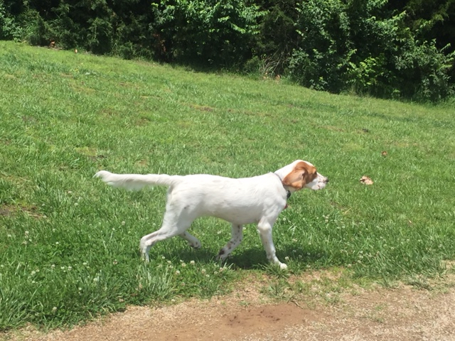 Tucker doing his creepy walk approaching a butterfly.