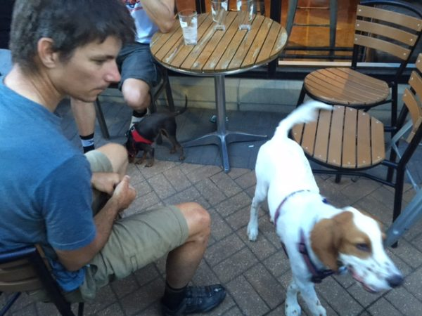 Tucker ran over to Tuesday Night beer night at PT's. It was long for him. He eventually ditched to cycling crowd to go hang out at the other end of the patio with a group that had a Chihuaha.