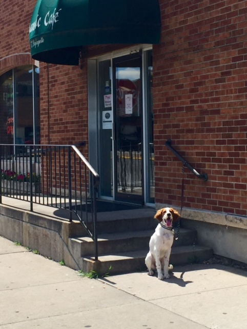 Tucker waiting patiently at a coffeeshop in Winona.