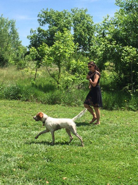 Trudi and Tucker walking before the flight yesterday. Tucker rolled around in a muddy puddle trying to cool off. He is pointing butterflies here.