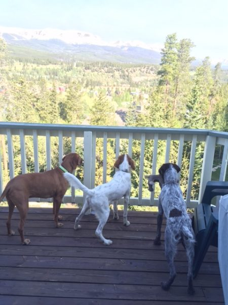 Jack, Tucker and Nikola are enjoying the view.