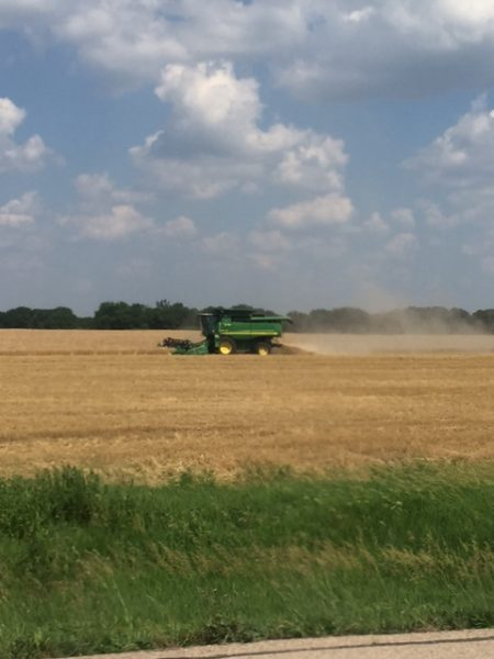 They are already harvesting wheat in Southeastern Kansas.