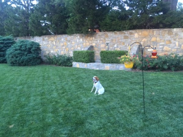 Tucker likes their backyard. It is pretty expansive.