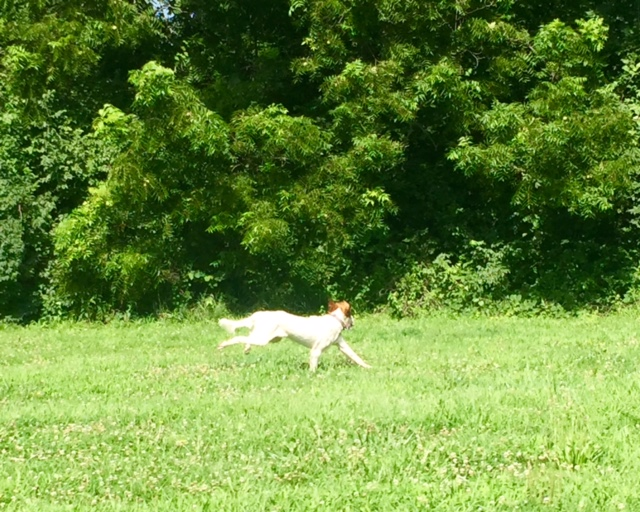 Tucker isn't much into the heat either.  He looks like he is flying here.