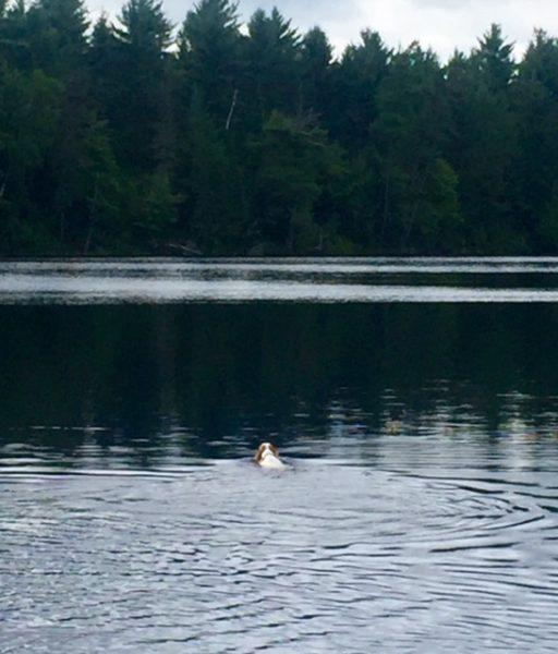 Tucker even like to swim by himself.