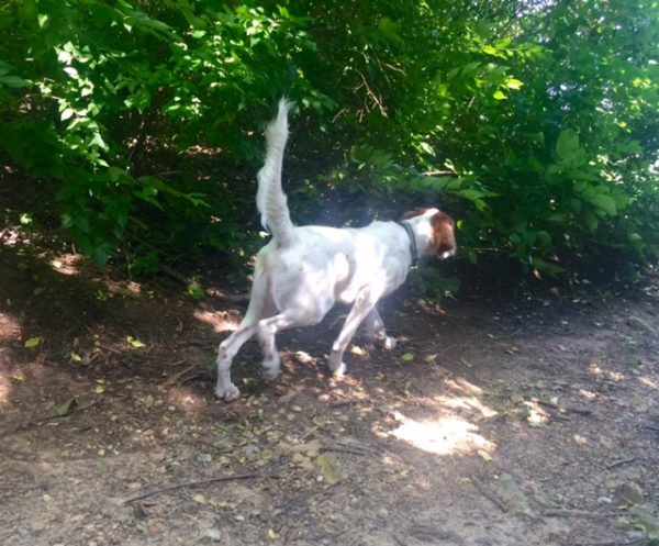 "Tucker starting his ""creepy walk"", coming up on a bird, or butterfly."